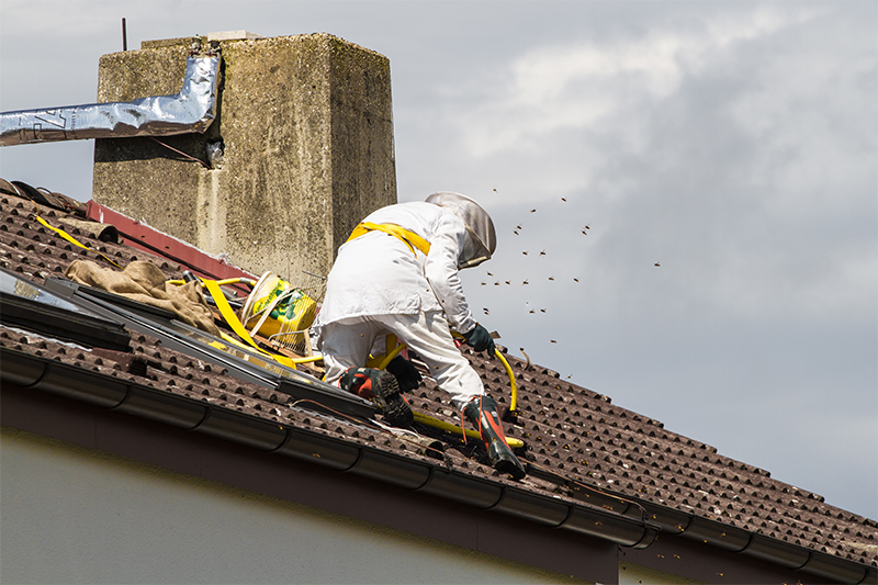 Bee Pest Control in UK United Kingdom